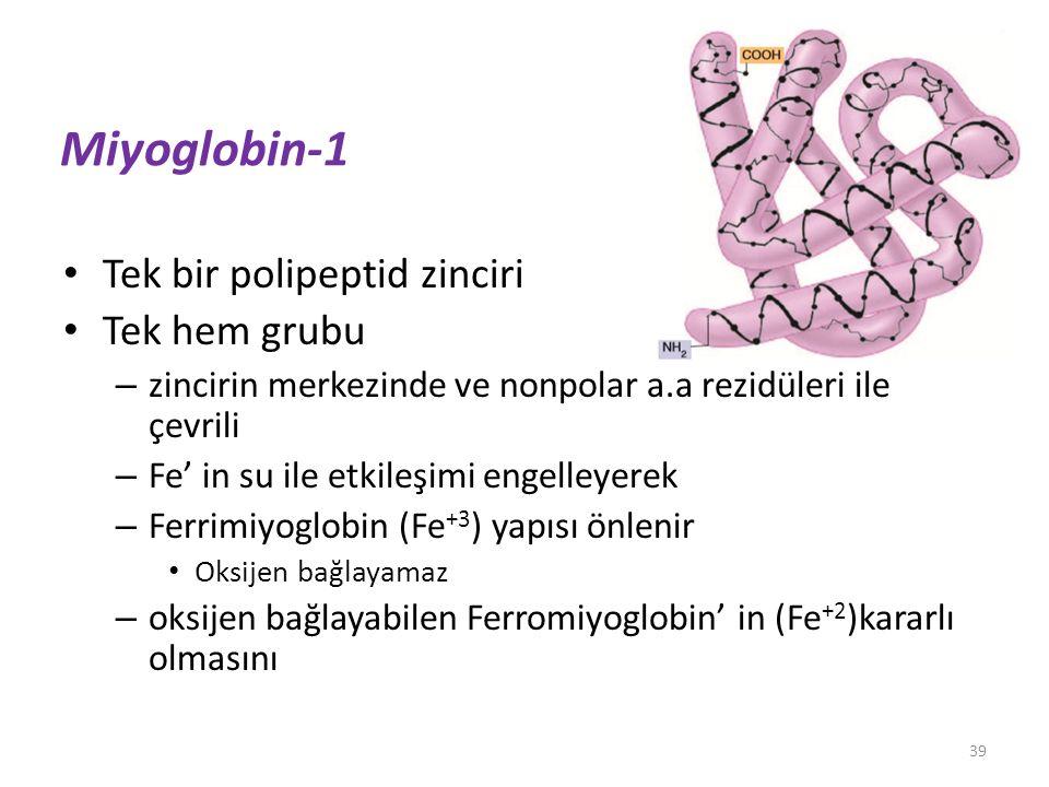Miyoglobin-1 Tek bir polipeptid zinciri Tek hem grubu – zincirin merkezinde ve nonpolar a.a rezidüleri ile çevrili – Fe' in su ile etkileşimi engelley