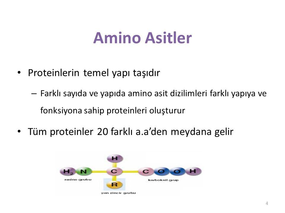 Amino Asitler Proteinlerin temel yapı taşıdır – Farklı sayıda ve yapıda amino asit dizilimleri farklı yapıya ve fonksiyona sahip proteinleri oluşturur Tüm proteinler 20 farklı a.a'den meydana gelir 4