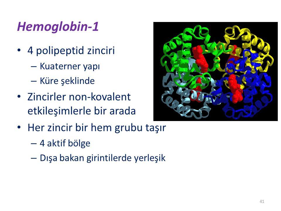 Hemoglobin-1 4 polipeptid zinciri – Kuaterner yapı – Küre şeklinde Zincirler non-kovalent etkileşimlerle bir arada Her zincir bir hem grubu taşır – 4 aktif bölge – Dışa bakan girintilerde yerleşik 41