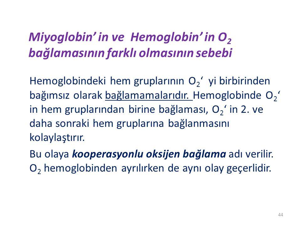 Miyoglobin' in ve Hemoglobin' in O 2 bağlamasının farklı olmasının sebebi Hemoglobindeki hem gruplarının O 2 ' yi birbirinden bağımsız olarak bağlamamalarıdır.