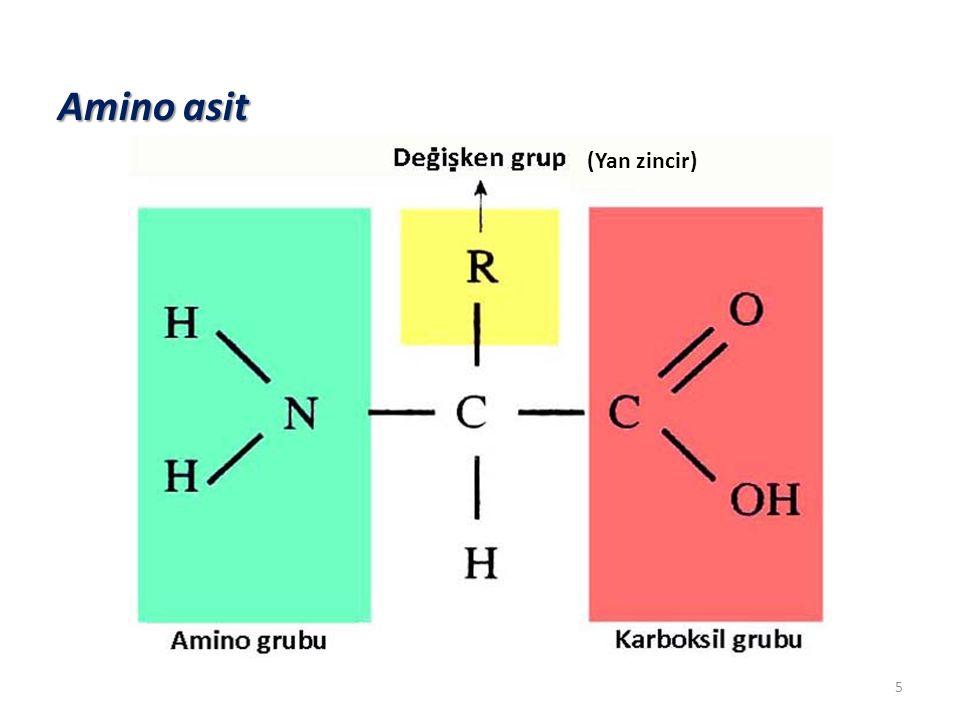 Fizyolojik koşullarda sahip oldukları net elektrik yüküne göre a.a' lerin sınıflandırılması Nötr amino asitler (amfoterik) Eşit sayıda karboksil ve amino gruplarına sahiptirler.