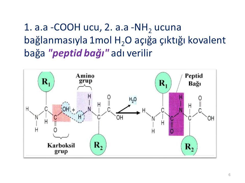 1. a.a -COOH ucu, 2. a.a -NH 2 ucuna bağlanmasıyla 1mol H 2 O açığa çıktığı kovalent bağa