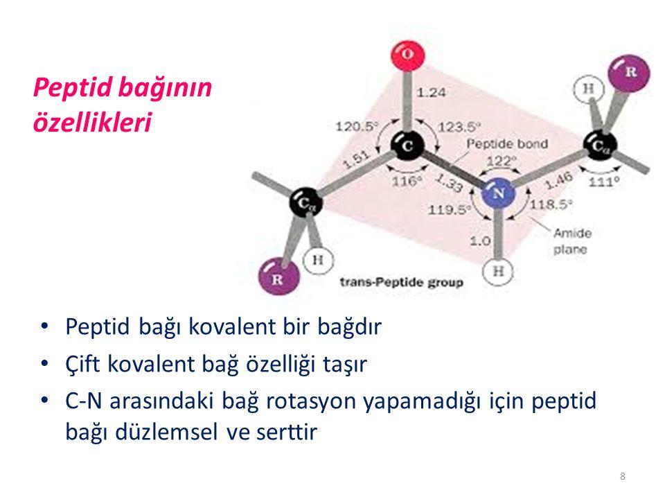 Peptid bağının özellikleri Peptid bağı kovalent bir bağdır Çift kovalent bağ özelliği taşır C-N arasındaki bağ rotasyon yapamadığı için peptid bağı düzlemsel ve serttir 8