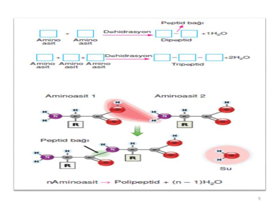 Miyoglobin-2 Miyoglobine bağlanmada oksijen için p 50 1mmHg' dır.