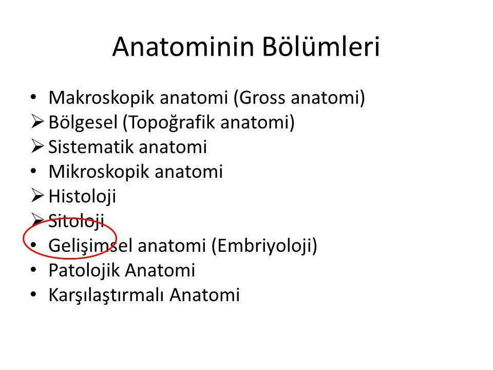Anatominin Bölümleri Makroskopik anatomi (Gross anatomi)  Bölgesel (Topoğrafik anatomi)  Sistematik anatomi Mikroskopik anatomi  Histoloji  Sitolo