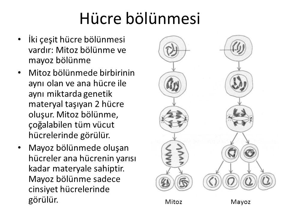 Hücre bölünmesi İki çeşit hücre bölünmesi vardır: Mitoz bölünme ve mayoz bölünme Mitoz bölünmede birbirinin aynı olan ve ana hücre ile aynı miktarda g