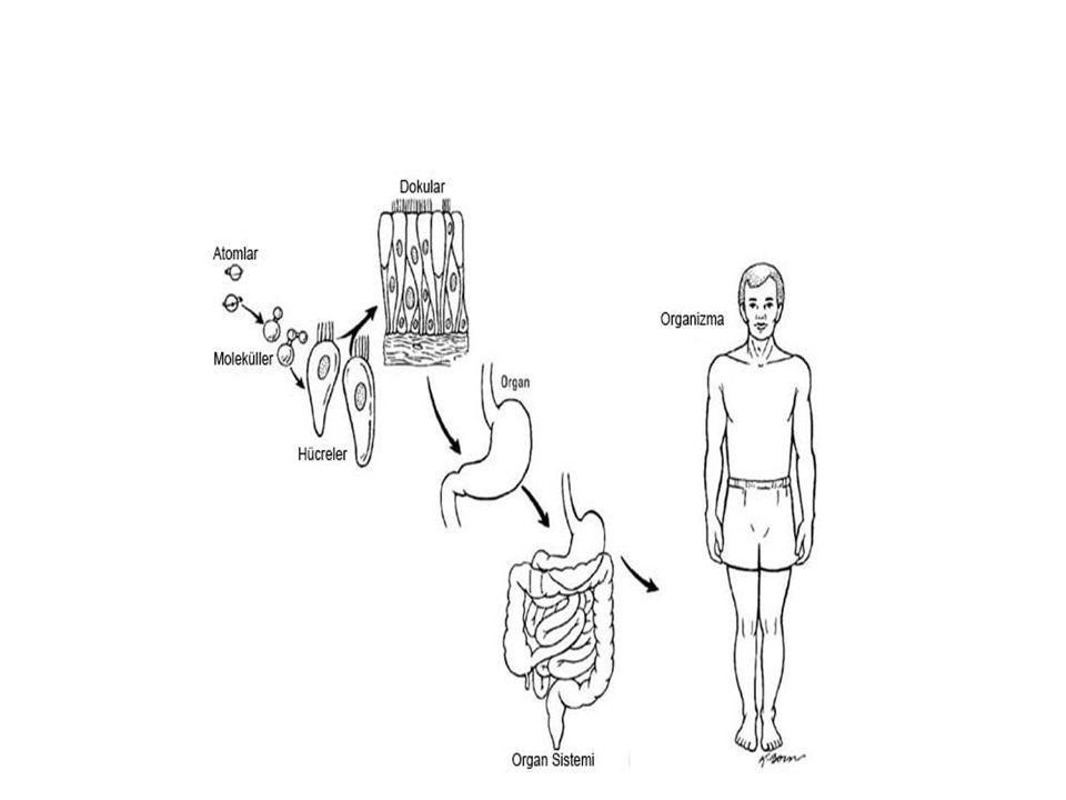 Hücre zarından madde geçişi Difüzyon: Konsantrasyon farkına bağlı olarak zardan maddelerin hareketine denir.