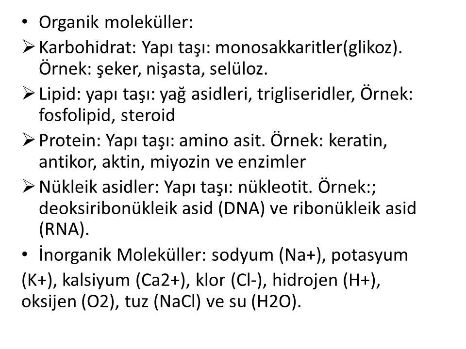 Organik moleküller:  Karbohidrat: Yapı taşı: monosakkaritler(glikoz). Örnek: şeker, nişasta, selüloz.  Lipid: yapı taşı: yağ asidleri, trigliseridle