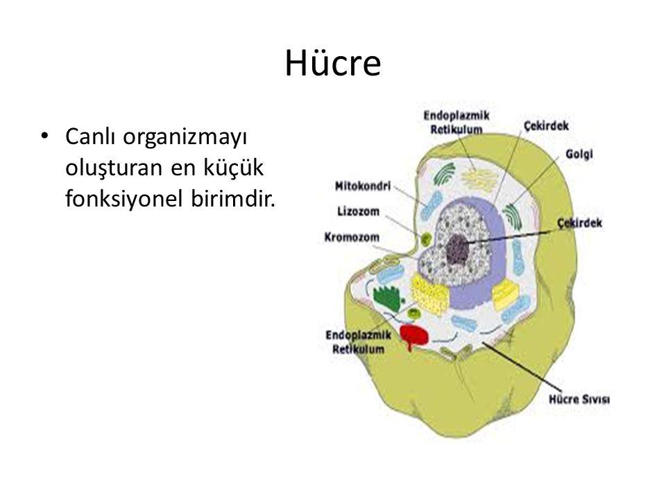 Hücre Canlı organizmayı oluşturan en küçük fonksiyonel birimdir.
