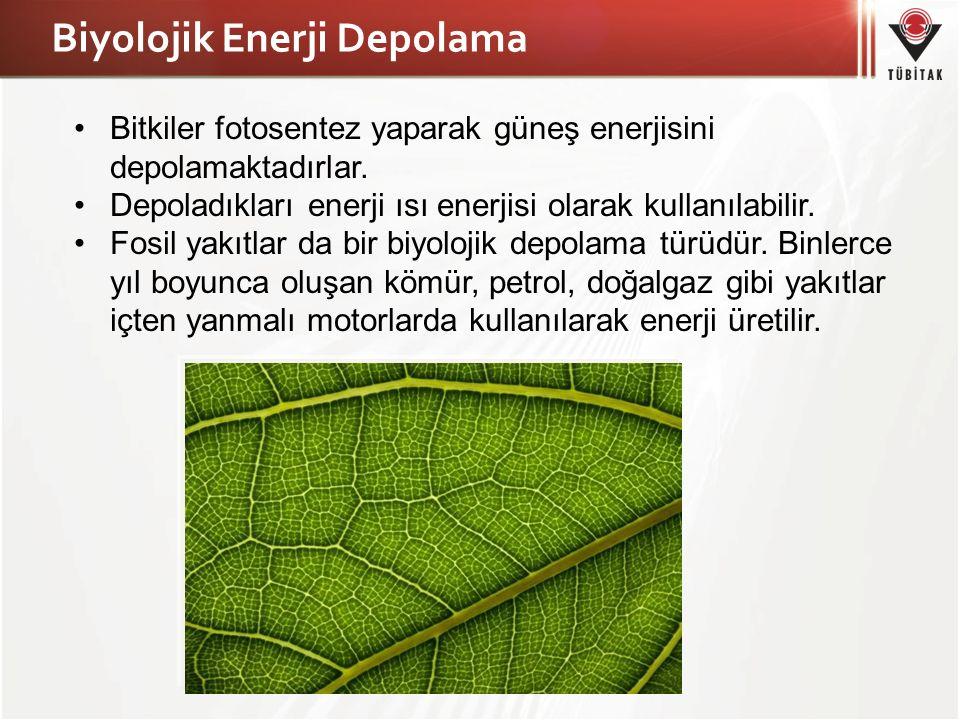 Biyolojik Enerji Depolama Bitkiler fotosentez yaparak güneş enerjisini depolamaktadırlar. Depoladıkları enerji ısı enerjisi olarak kullanılabilir. Fos