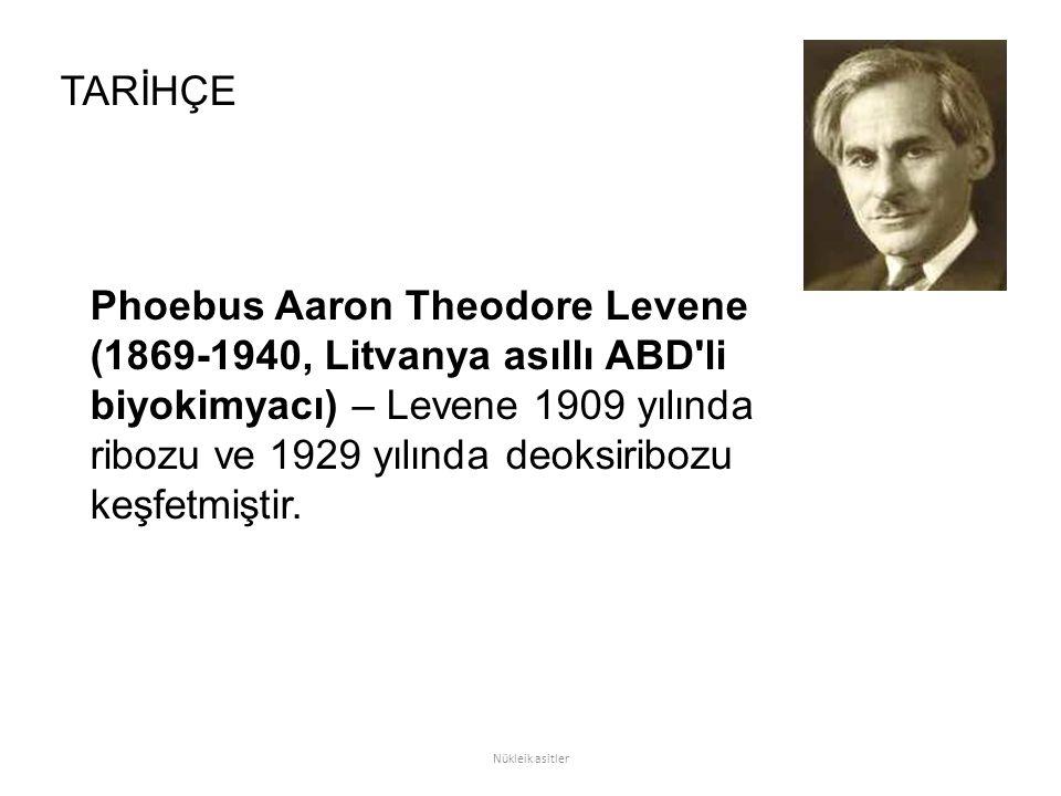 Phoebus Aaron Theodore Levene (1869-1940, Litvanya asıllı ABD'li biyokimyacı) – Levene 1909 yılında ribozu ve 1929 yılında deoksiribozu keşfetmiştir.