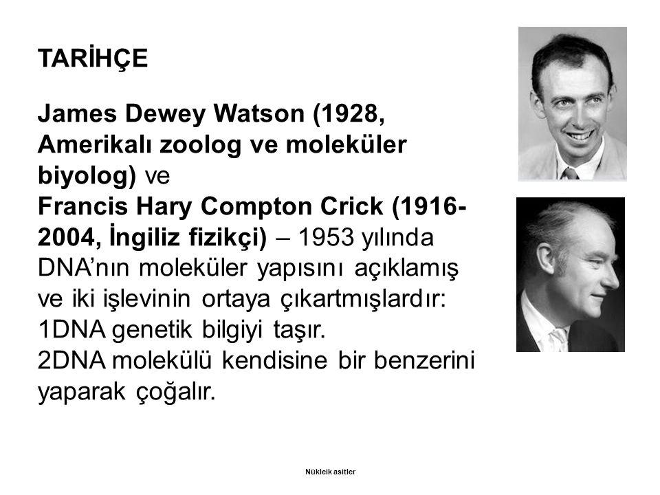 TARİHÇE James Dewey Watson (1928, Amerikalı zoolog ve moleküler biyolog) ve Francis Hary Compton Crick (1916- 2004, İngiliz fizikçi) – 1953 yılında DNA'nın moleküler yapısını açıklamış ve iki işlevinin ortaya çıkartmışlardır: 1DNA genetik bilgiyi taşır.