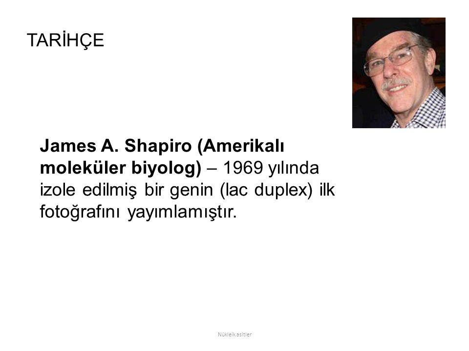 James A. Shapiro (Amerikalı moleküler biyolog) – 1969 yılında izole edilmiş bir genin (lac duplex) ilk fotoğrafını yayımlamıştır. TARİHÇE Nükleik asit