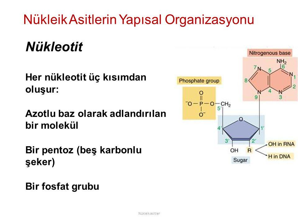 Nükleotit Her nükleotit üç kısımdan oluşur: Azotlu baz olarak adlandırılan bir molekül Bir pentoz (beş karbonlu şeker) Bir fosfat grubu Nükleik Asitlerin Yapısal Organizasyonu Nükleik asitler