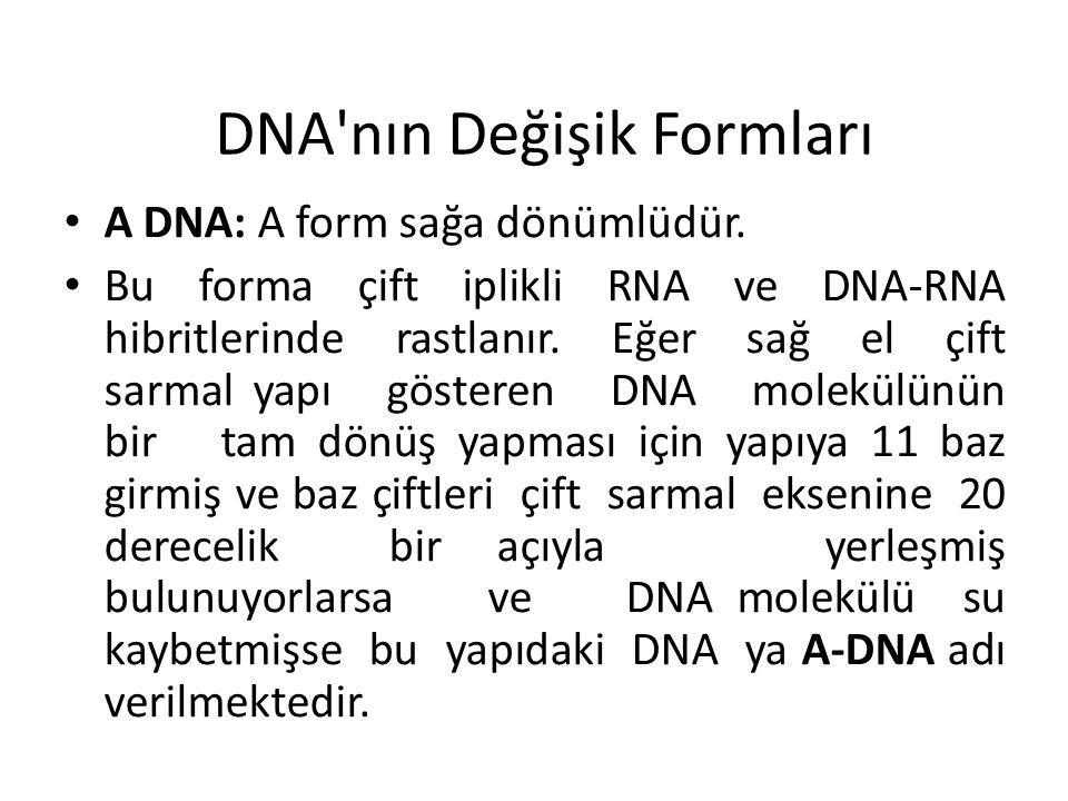 DNA'nın Değişik Formları A DNA: A form sağa dönümlüdür. Bu forma çift iplikli RNA ve DNA-RNA hibritlerinde rastlanır. Eğer sağ el çift sarmal yapı gös