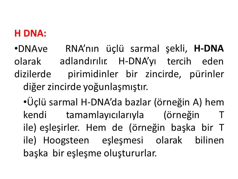 H DNA: DNAve olarak dizilerde RNA'nınüçlüsarmal şekli,H-DNA terciheden adlandırılır.H-DNA'yı pirimidinlerbirzincirde,pürinler diğer zincirde yoğunlaşmıştır.