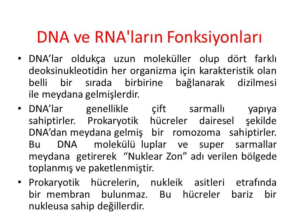 DNA ve RNA ların Fonksiyonları DNA'lar oldukça uzun moleküller olup dört farklı deoksinukleotidin her organizma için karakteristik olan belli bir sırada birbirine bağlanarak dizilmesi ile meydana gelmişlerdir.