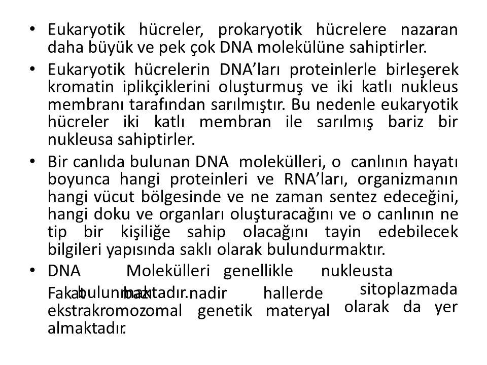 Eukaryotik hücreler, prokaryotik hücrelere nazaran daha büyük ve pek çok DNA molekülüne sahiptirler. Eukaryotik hücrelerin DNA'ları proteinlerle birle