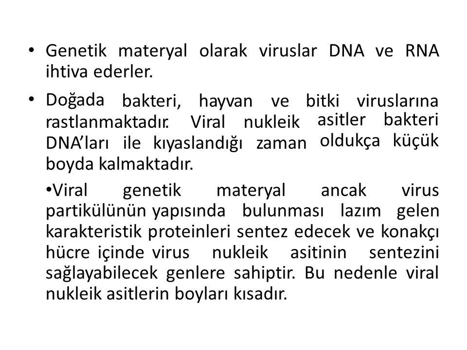 GenetikmateryalolarakviruslarDNAveRNA ihtiva ederler. Doğada bakteri,hayvanvebitkiviruslarına rastlanmaktadır.Viralnukleik asitler oldukça bakteri küç