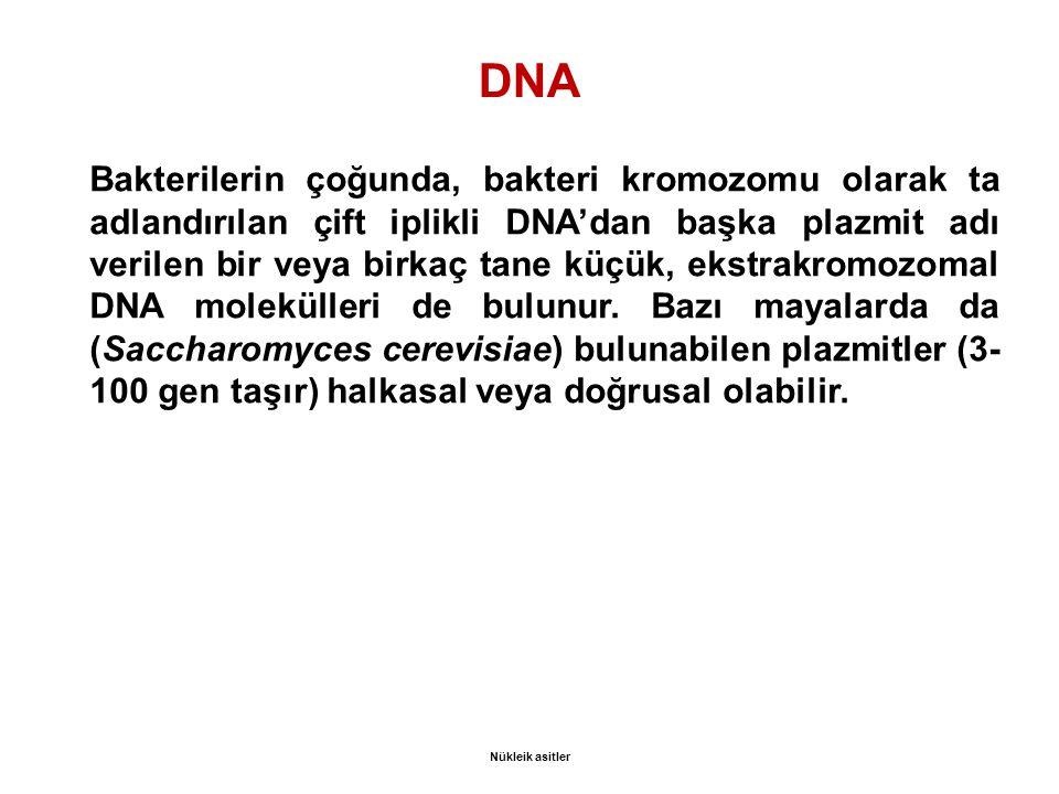 DNA Bakterilerin çoğunda, bakteri kromozomu olarak ta adlandırılan çift iplikli DNA'dan başka plazmit adı verilen bir veya birkaç tane küçük, ekstrakromozomal DNA molekülleri de bulunur.