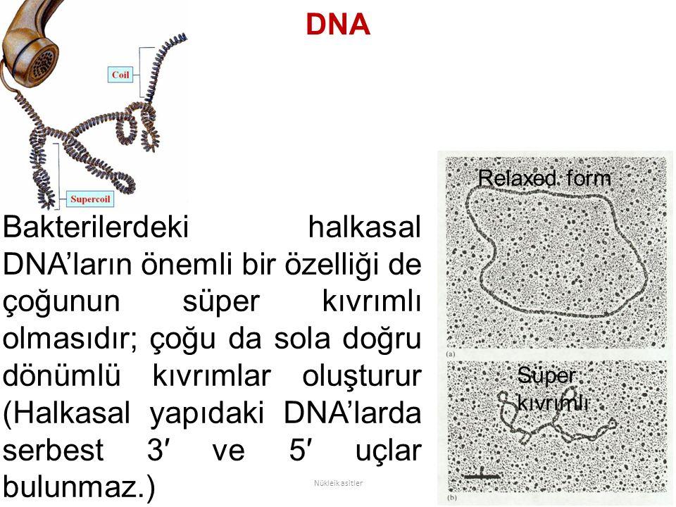 DNA Bakterilerdeki halkasal DNA'ların önemli bir özelliği de çoğunun süper kıvrımlı olmasıdır; çoğu da sola doğru dönümlü kıvrımlar oluşturur (Halkasal yapıdaki DNA'larda serbest 3′ ve 5′ uçlar bulunmaz.) Nükleik asitler Relaxed form Süper kıvrımlı