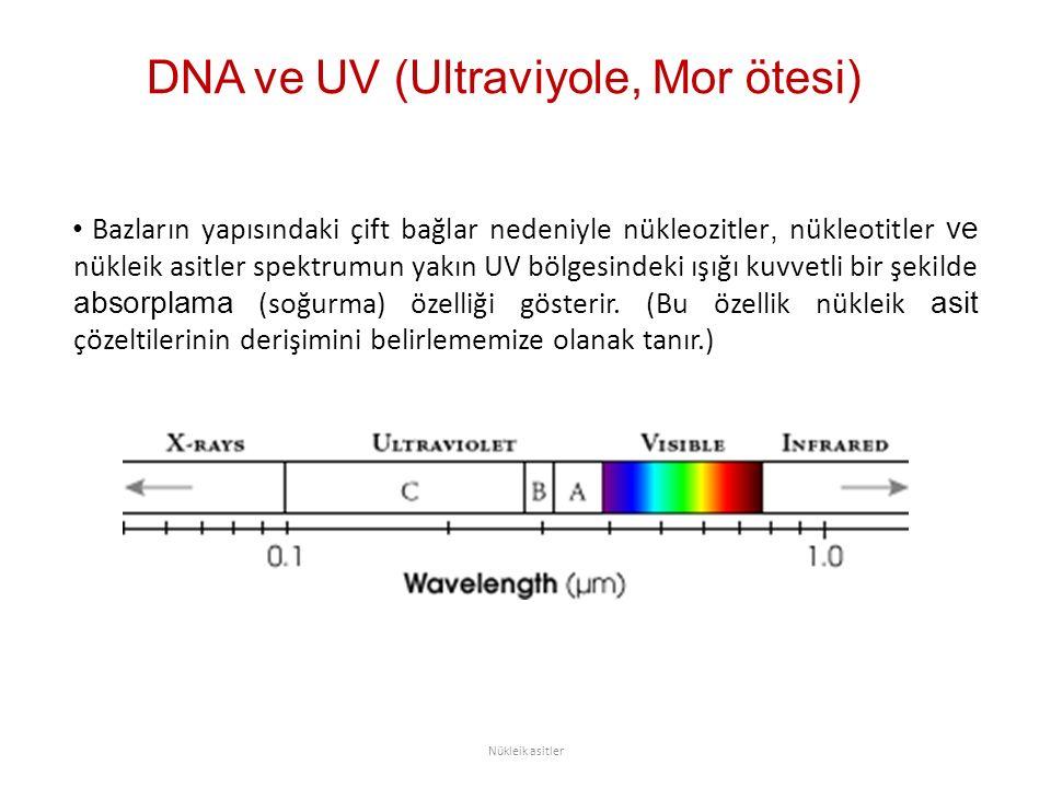 DNA ve UV (Ultraviyole, Mor ötesi) Bazların yapısındaki çift bağlar nedeniyle nükleozitler, nükleotitler ve nükleik asitler spektrumun yakın UV bölgesindeki ışığı kuvvetli bir şekilde absorplama (soğurma) özelliği gösterir.