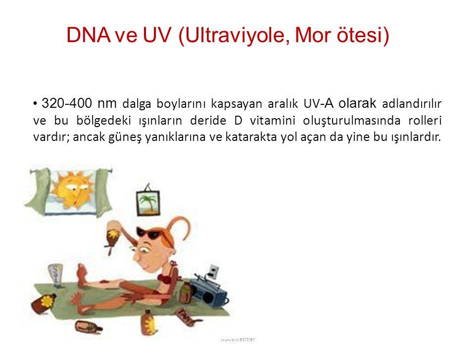 DNA ve UV (Ultraviyole, Mor ötesi) 320-400 nm dalga boylarını kapsayan aralık UV -A olarak adlandırılır ve bu bölgedeki ışınların deride D vitamini oluşturulmasında rolleri vardır; ancak güneş yanıklarına ve katarakta yol açan da yine bu ışınlardır.