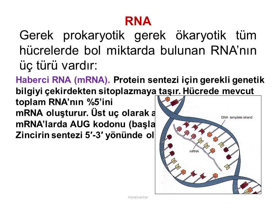 RNA Gerek prokaryotik gerek ökaryotik tüm hücrelerde bol miktarda bulunan RNA'nın üç türü vardır: Nükleik asitler Haberci RNA (mRNA).