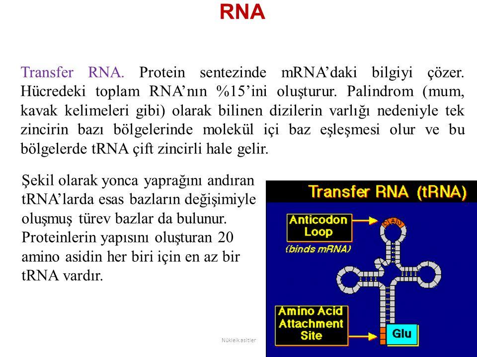 RNA Transfer RNA. Protein sentezinde mRNA'daki bilgiyi çözer. Hücredeki toplam RNA'nın %15'ini oluşturur. Palindrom (mum, kavak kelimeleri gibi) olara