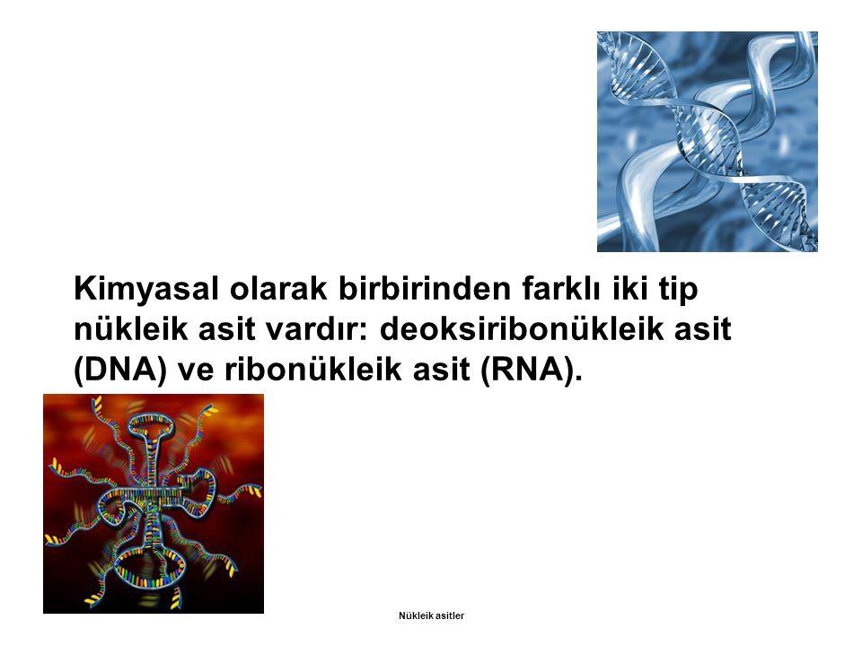 Kimyasal olarak birbirinden farklı iki tip nükleik asit vardır: deoksiribonükleik asit (DNA) ve ribonükleik asit (RNA). Nükleik asitler