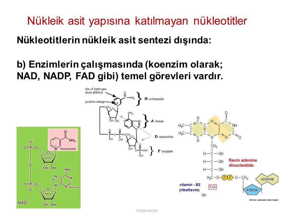 Nükleik asit yapısına katılmayan nükleotitler Nükleik asitler Nükleotitlerin nükleik asit sentezi dışında: b) Enzimlerin çalışmasında (koenzim olarak; NAD, NADP, FAD gibi) temel görevleri vardır.