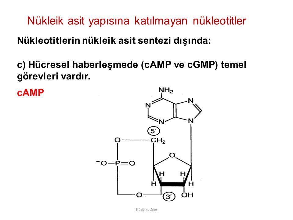 Nükleik asit yapısına katılmayan nükleotitler Nükleik asitler Nükleotitlerin nükleik asit sentezi dışında: c) Hücresel haberleşmede (cAMP ve cGMP) temel görevleri vardır.