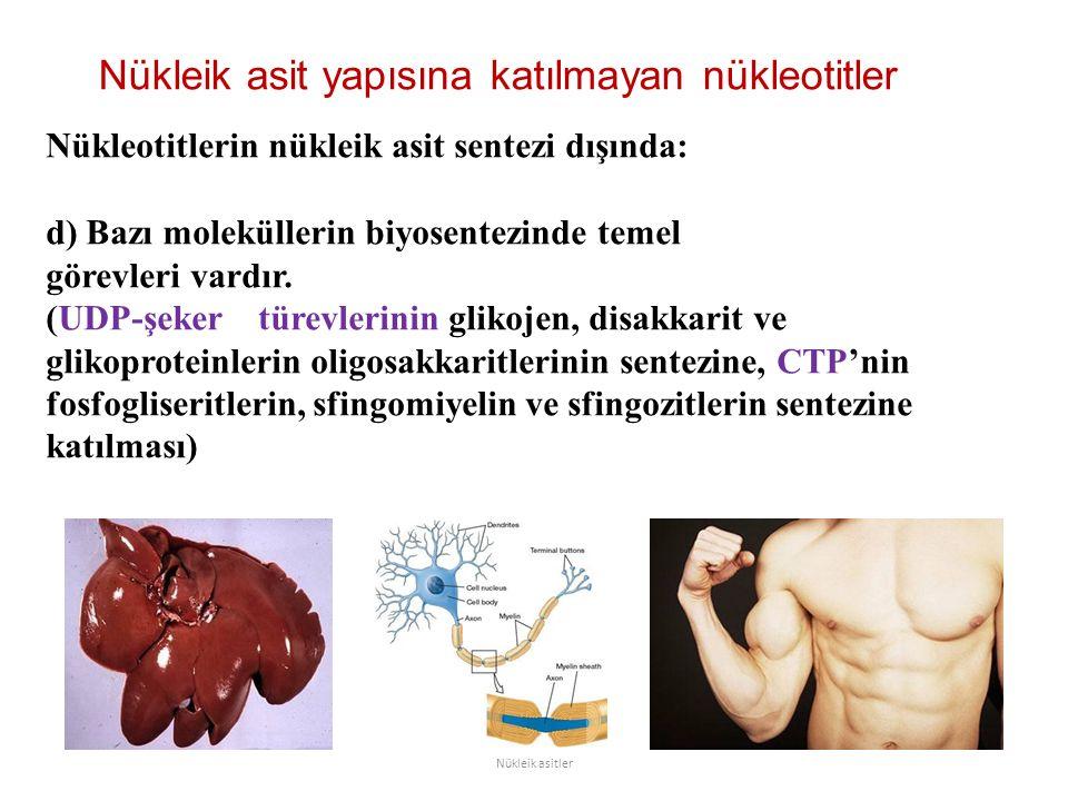 Nükleik asit yapısına katılmayan nükleotitler Nükleik asitler Nükleotitlerin nükleik asit sentezi dışında: d) Bazı moleküllerin biyosentezinde temel g