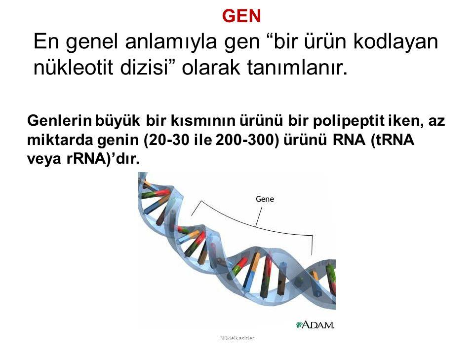 """GEN En genel anlamıyla gen """"bir ürün kodlayan nükleotit dizisi"""" olarak tanımlanır. Nükleik asitler Genlerin büyük bir kısmının ürünü bir polipeptit ik"""