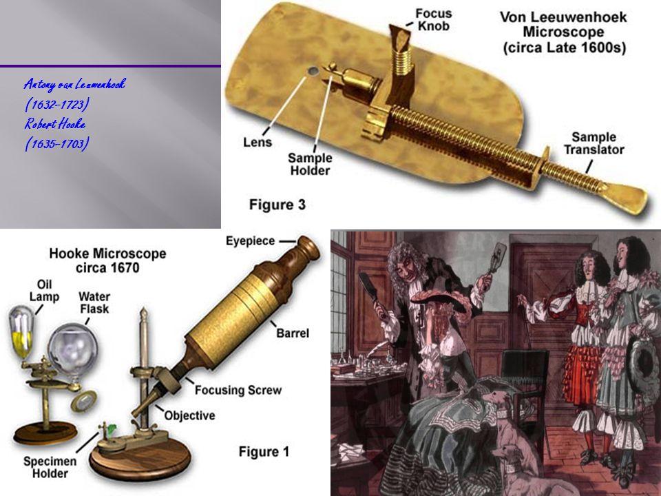Antony van Leuwenhook (1632–1723) Robert Hooke (1635–1703)