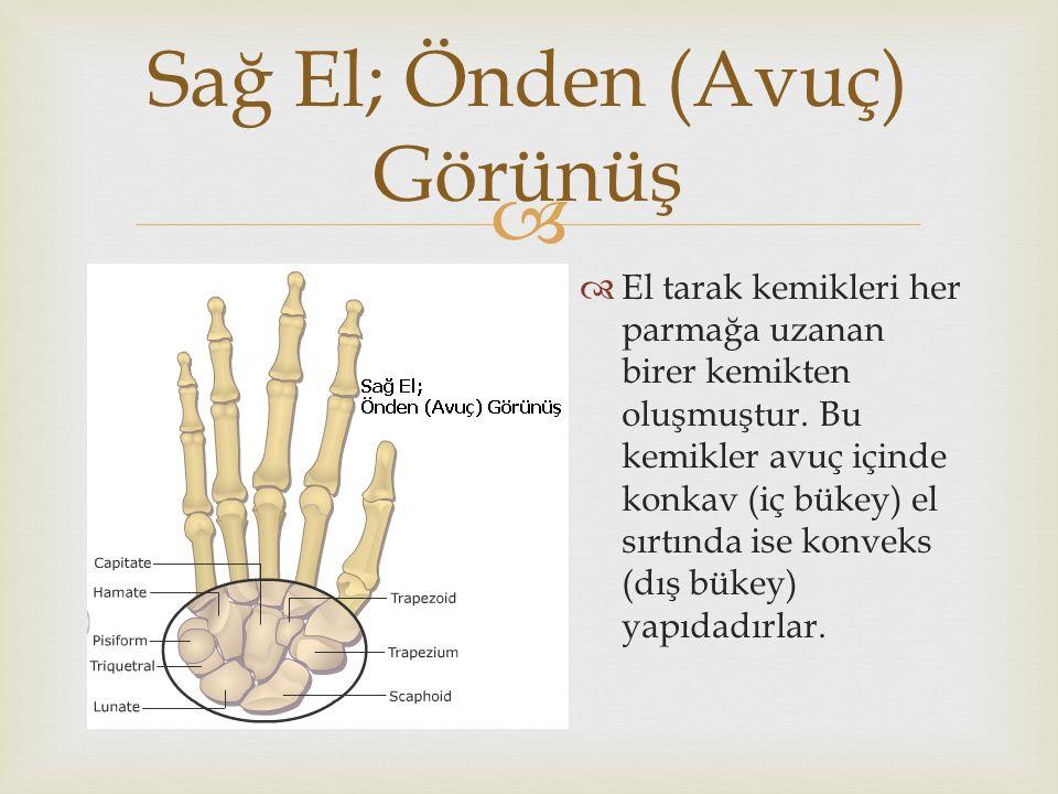   El tarak kemikleri her parmağa uzanan birer kemikten oluşmuştur. Bu kemikler avuç içinde konkav (iç bükey) el sırtında ise konveks (dış bükey) yap