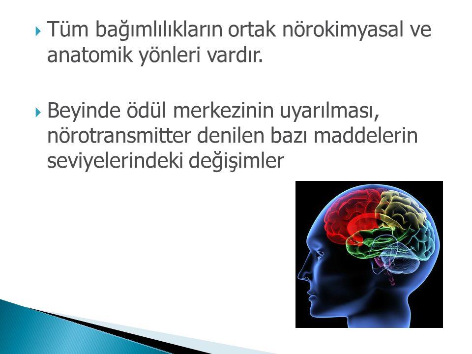 Tüm bağımlılıkların ortak nörokimyasal ve anatomik yönleri vardır.  Beyinde ödül merkezinin uyarılması, nörotransmitter denilen bazı maddelerin sev