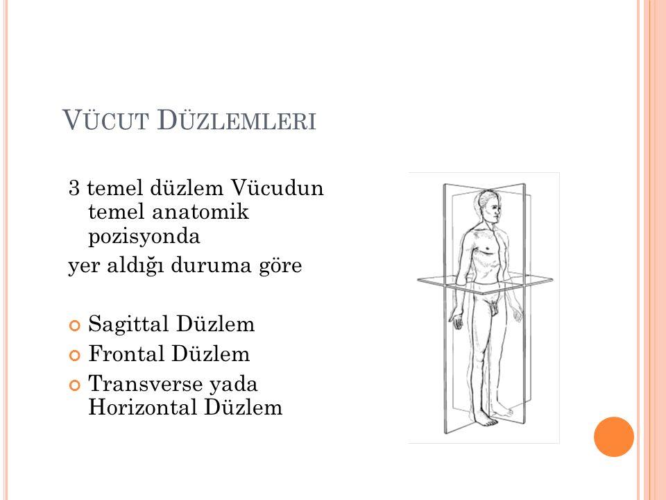 V ÜCUT D ÜZLEMLERI 3 temel düzlem Vücudun temel anatomik pozisyonda yer aldığı duruma göre Sagittal Düzlem Frontal Düzlem Transverse yada Horizontal Düzlem