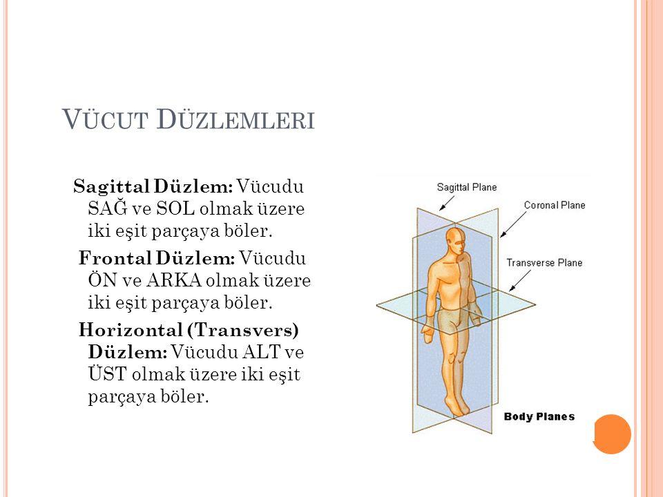 V ÜCUT D ÜZLEMLERI Sagittal Düzlem: Vücudu SAĞ ve SOL olmak üzere iki eşit parçaya böler.