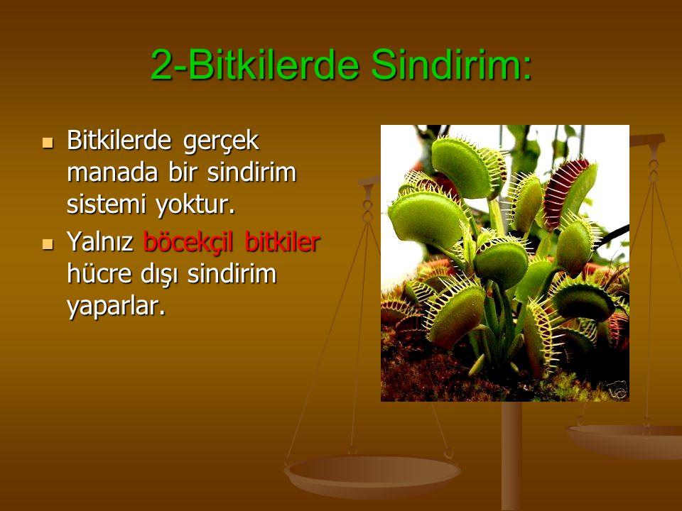 2-Bitkilerde Sindirim: Bitkilerde gerçek manada bir sindirim sistemi yoktur.