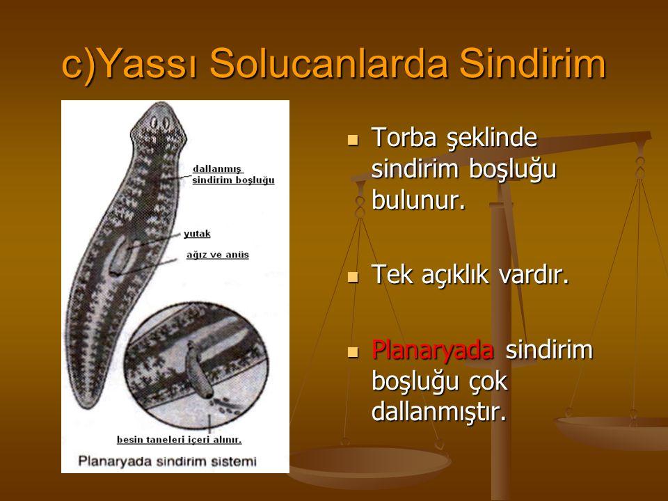 c)Yassı Solucanlarda Sindirim Torba şeklinde sindirim boşluğu bulunur. Tek açıklık vardır. Planaryada sindirim boşluğu çok dallanmıştır.