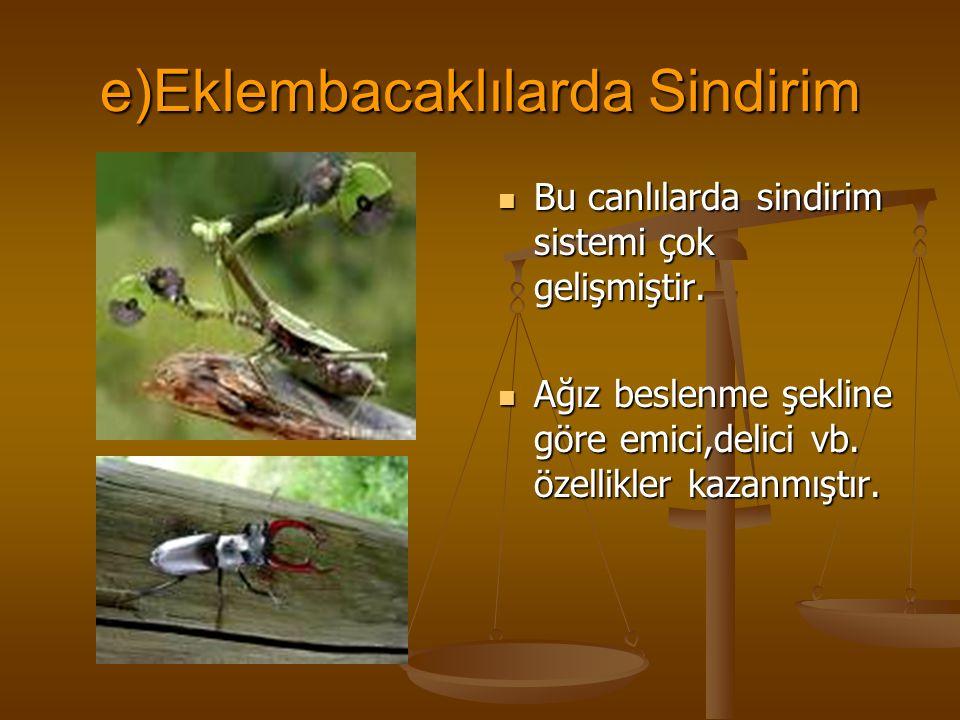 e)Eklembacaklılarda Sindirim Bu canlılarda sindirim sistemi çok gelişmiştir. Ağız beslenme şekline göre emici,delici vb. özellikler kazanmıştır.
