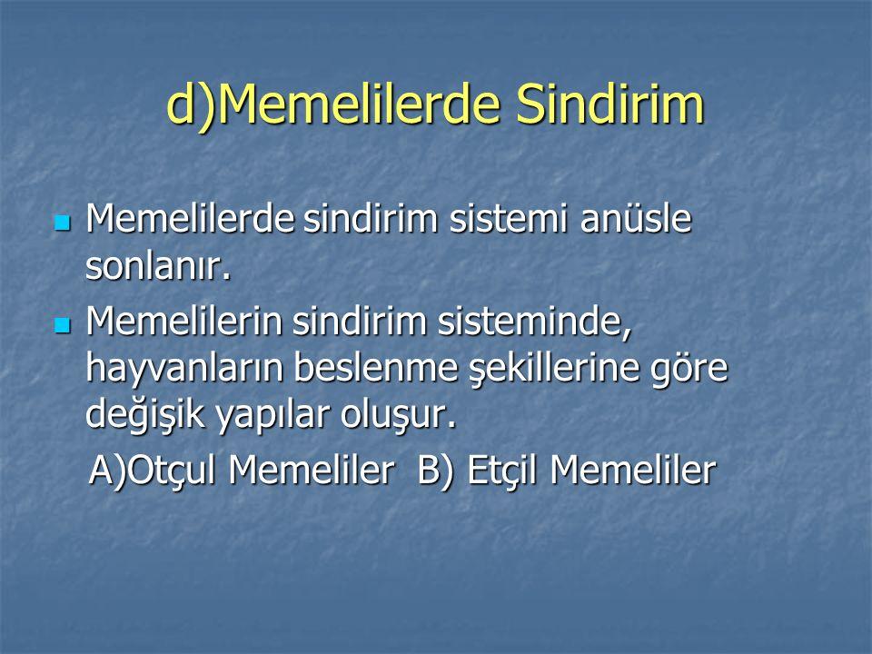 d)Memelilerde Sindirim Memelilerde sindirim sistemi anüsle sonlanır. Memelilerde sindirim sistemi anüsle sonlanır. Memelilerin sindirim sisteminde, ha