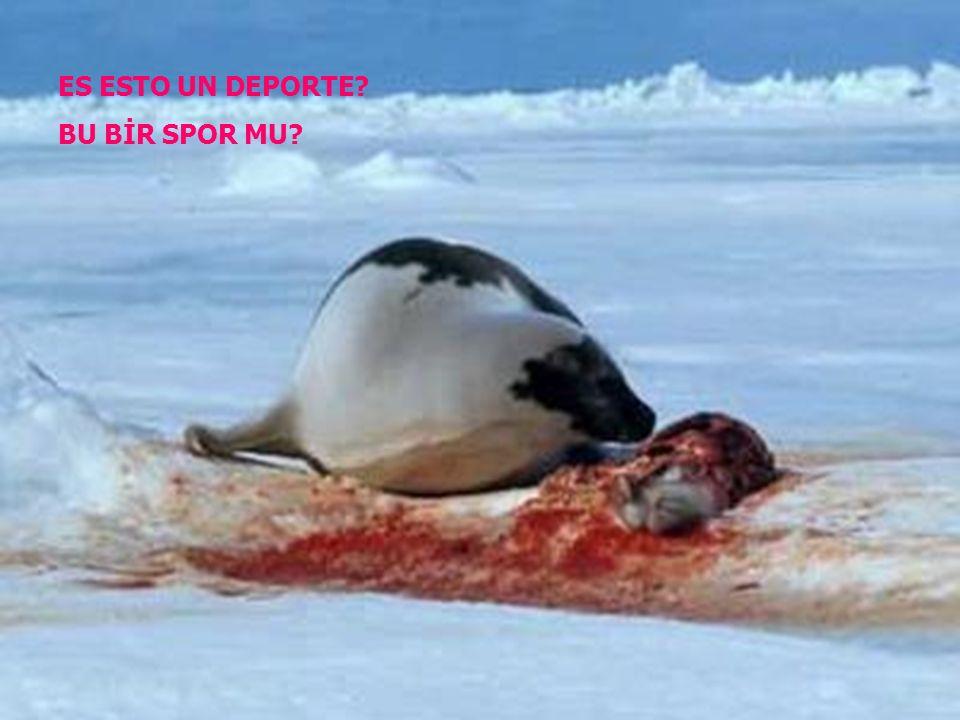 No podemos seguir permitiendo que nos maten. Bizi öldürmelerine izim vermeye devam edemeyiz.