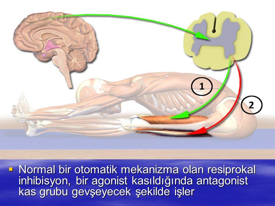 Normal bir otomatik mekanizma olan resiprokal inhibisyon, bir agonist kasıldığında antagonist kas grubu gevşeyecek şekilde işler Normal bir otomatik m