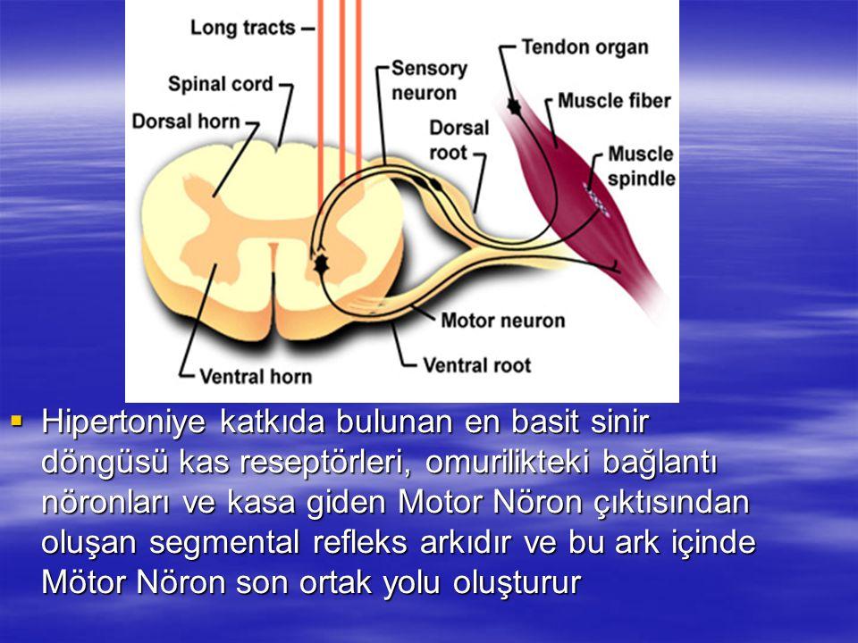 Hipertoniye katkıda bulunan en basit sinir döngüsü kas reseptörleri, omurilikteki bağlantı nöronları ve kasa giden Motor Nöron çıktısından oluşan segm