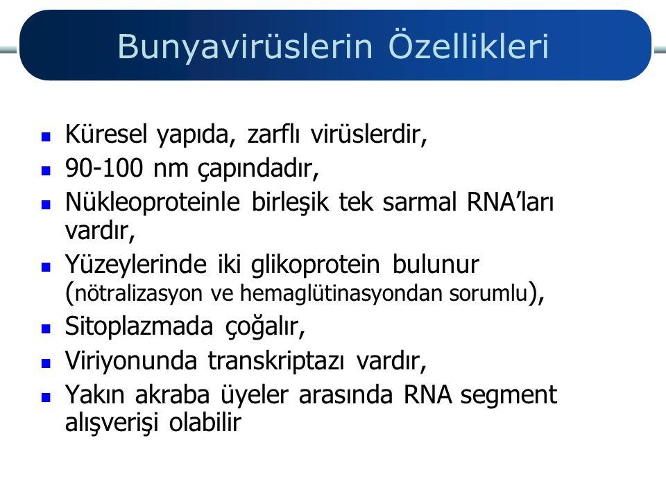 Bunyavirüslerin Özellikleri Küresel yapıda, zarflı virüslerdir, 90-100 nm çapındadır, Nükleoproteinle birleşik tek sarmal RNA'ları vardır, Yüzeylerind