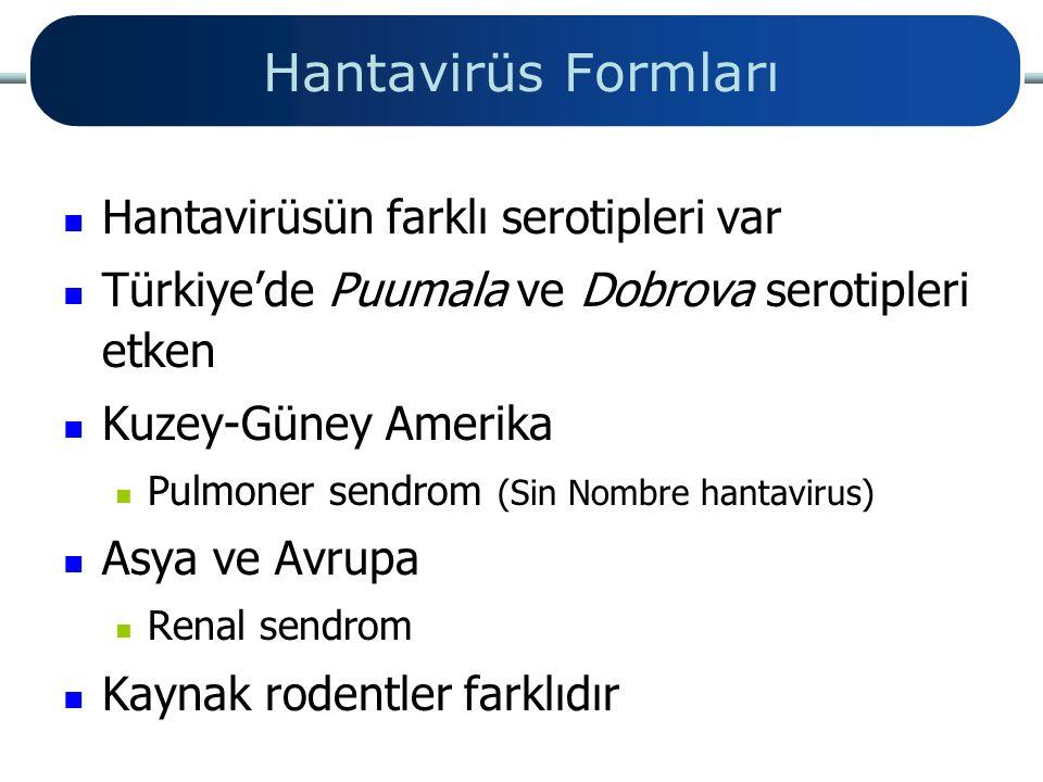 Hantavirüs Formları Hantavirüsün farklı serotipleri var Türkiye'de Puumala ve Dobrova serotipleri etken Kuzey-Güney Amerika Pulmoner sendrom (Sin Nomb