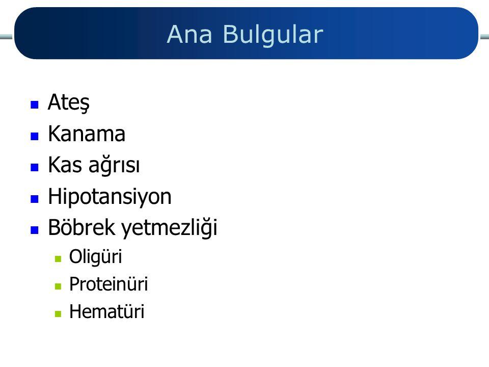 Ana Bulgular Ateş Kanama Kas ağrısı Hipotansiyon Böbrek yetmezliği Oligüri Proteinüri Hematüri