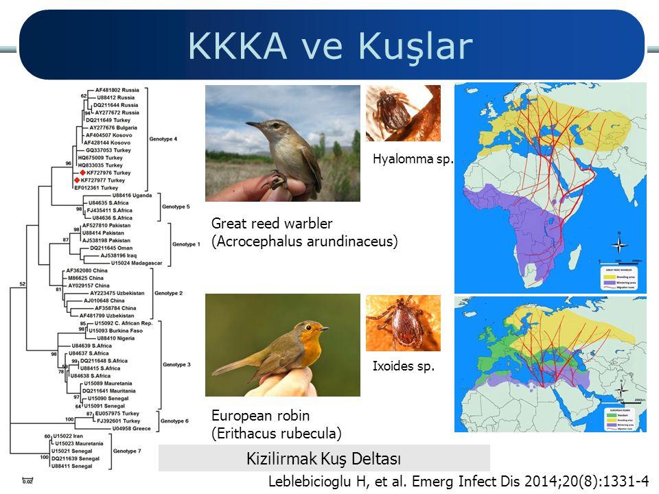 Great reed warbler (Acrocephalus arundinaceus) European robin (Erithacus rubecula) Hyalomma sp. Ixoides sp. KKKA ve Kuşlar Kizilirmak Kuş Deltası Lebl